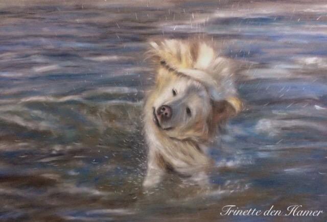 Labrador in zee