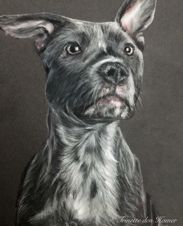 Stafford bull terrier in pastel