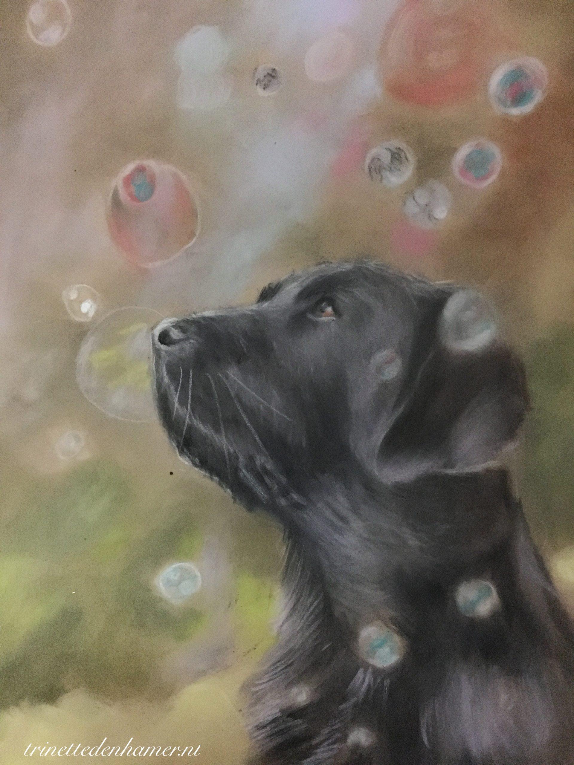 """Labrador met """"bubbles"""""""