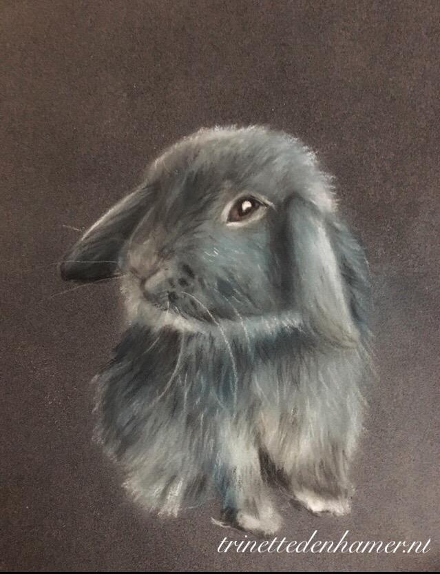Konijn/rabbit in pastel