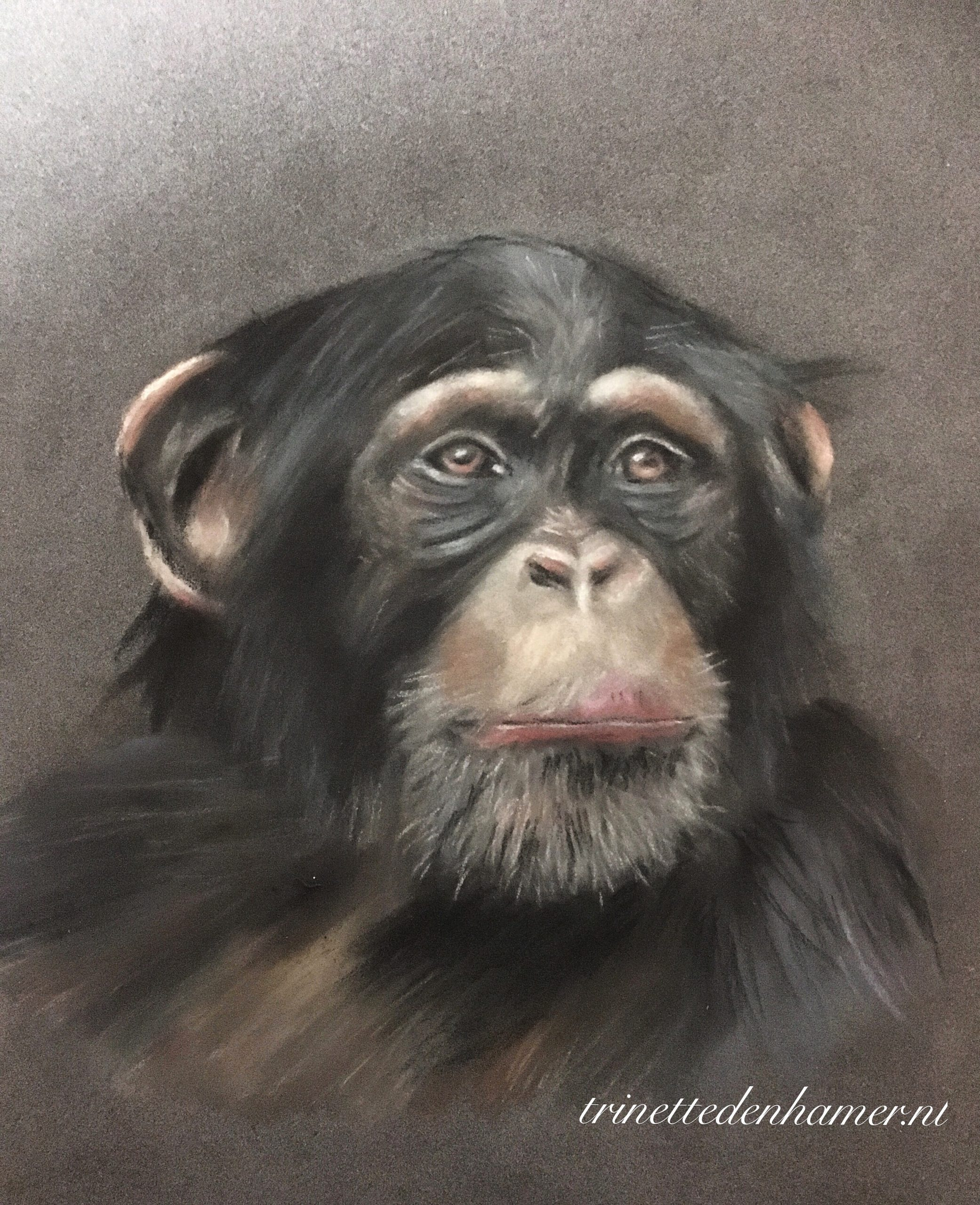 Chimpansee in pastel
