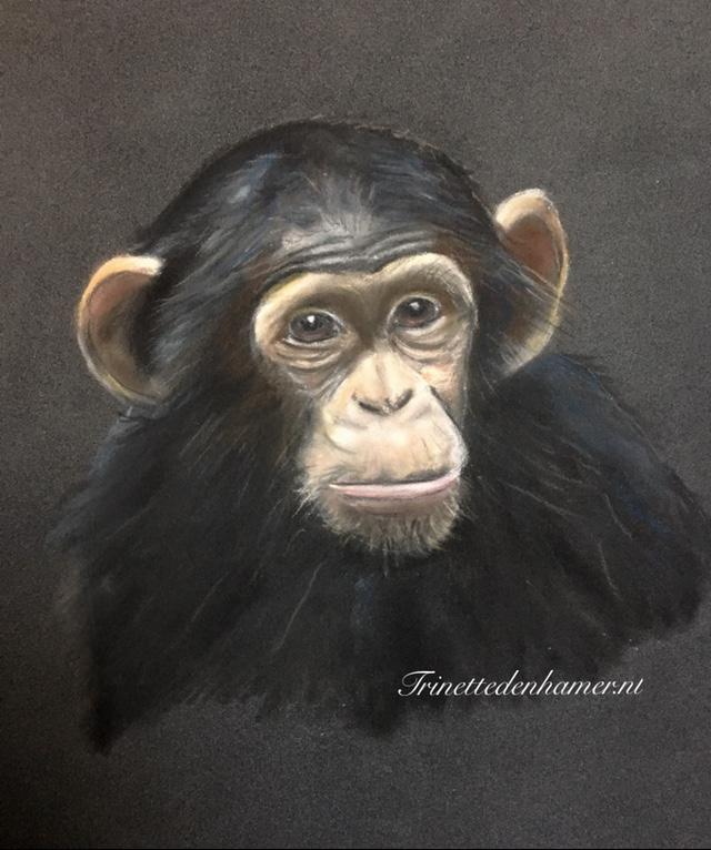 Chimpansee in pastel