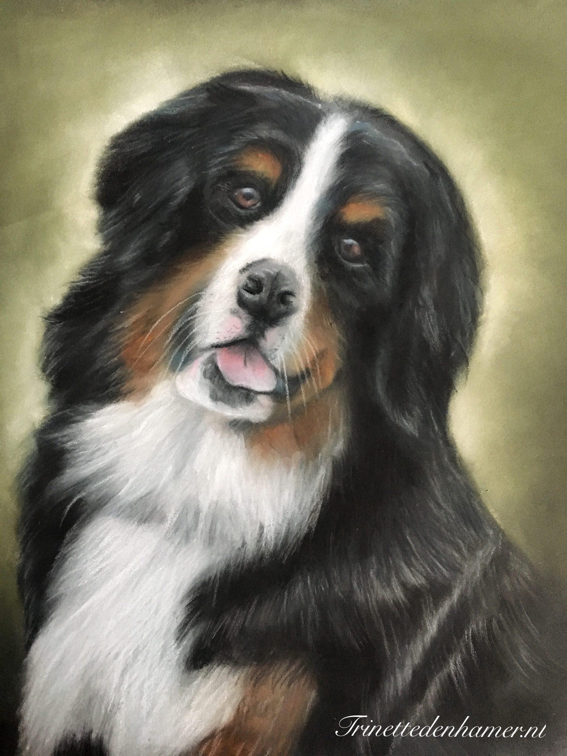 Portret van een Berner Sennen hond