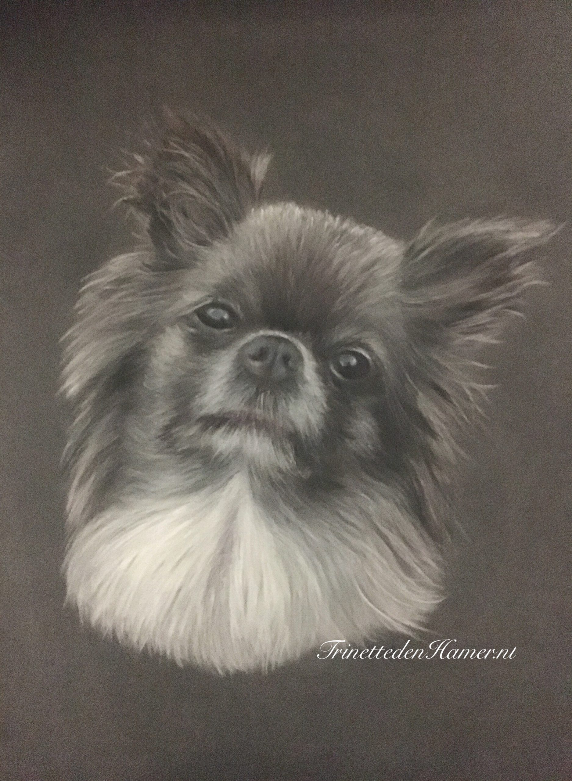 Chihuahua in pastel