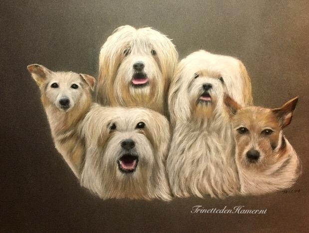 Portret van vijf honden