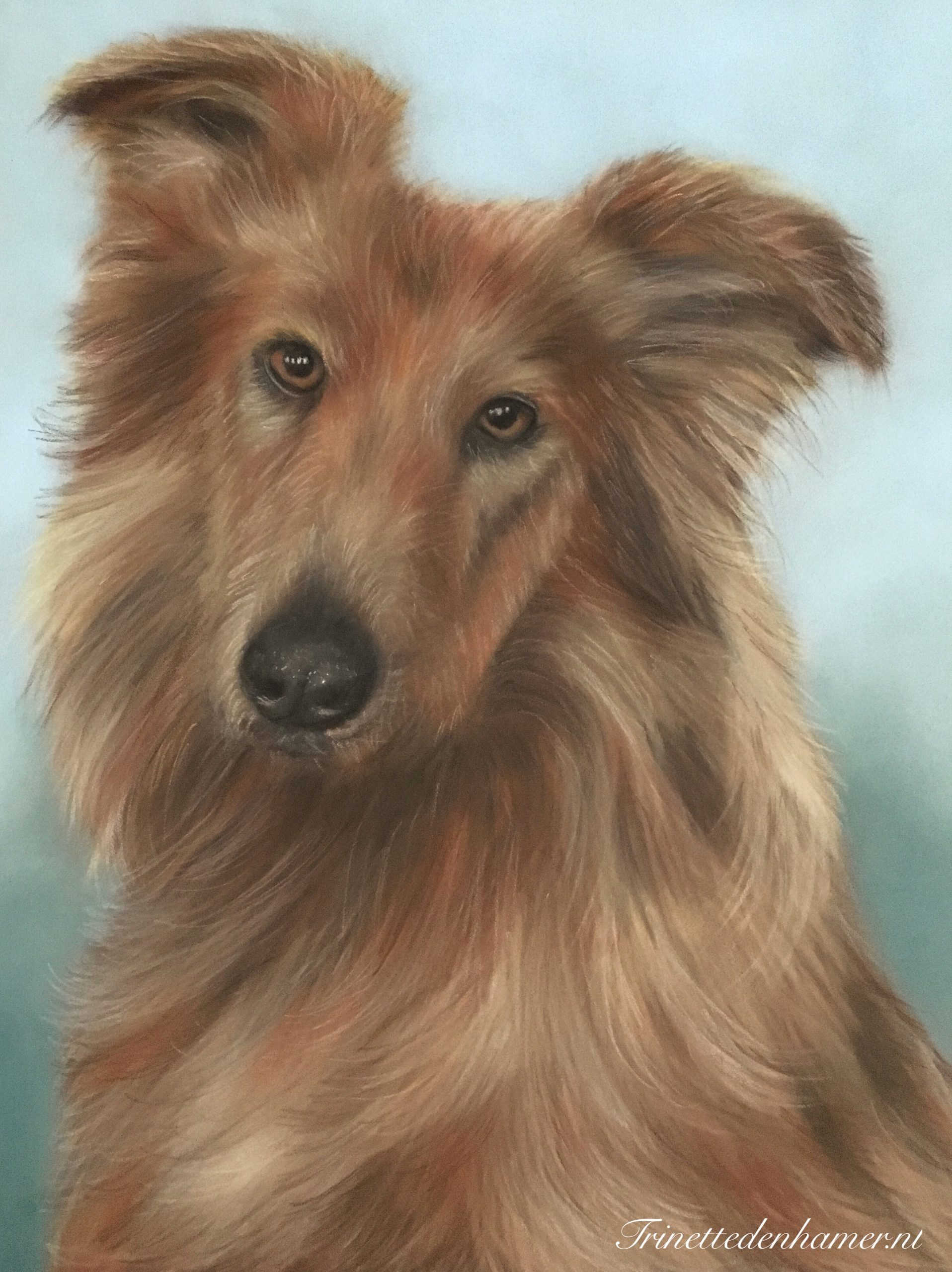 Bordercollie in pastel