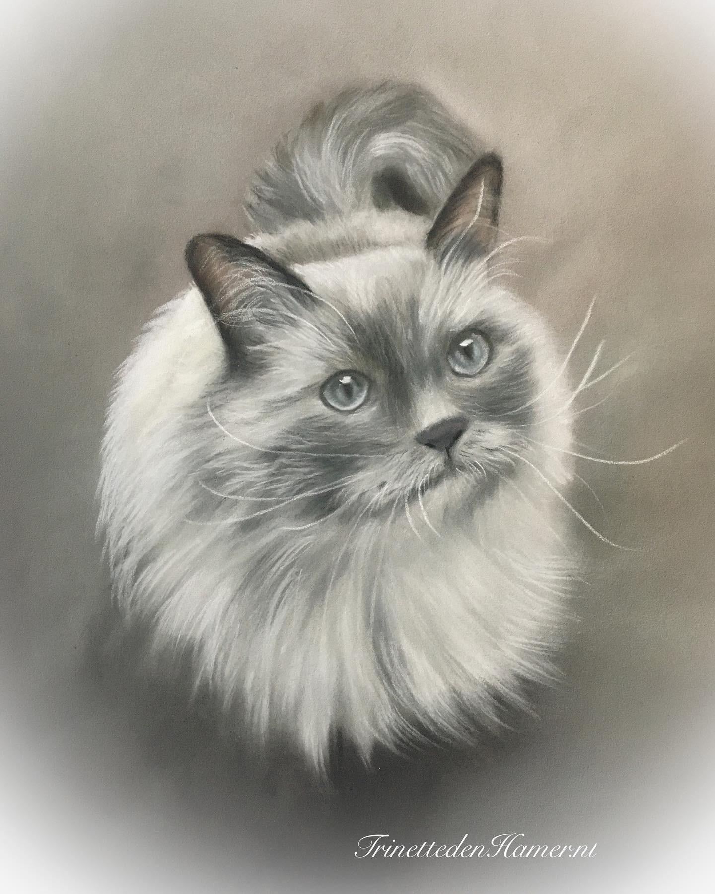 Kat in pastel