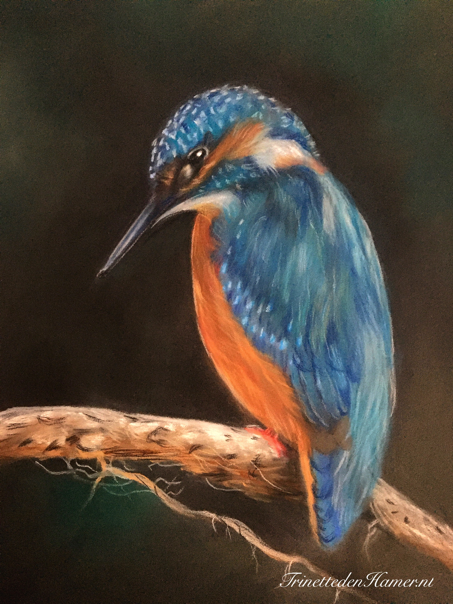 Ijsvogel in pastel