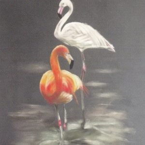 Kaart Flamingo's